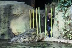 Krokodilfütterung